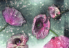 ULRIKE CRESPO - Poppies I - Fine Art Print 69 x 100 - edition 1 of 3 - €930