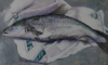 ANN KENEFICK ~ Salmon - watercolour - 51 x 43 cm - €600