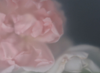 ULRIKE CRESPO - Roses, Pink & White - digital photograph - edition 1/5 - €220