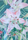 ALYN FENN - Pink Lillies - watercolour - 57 x 44 cm - €390