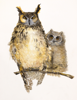 BIRGITTA SAFLUND - Great Eagle Owl with Juvenile - watercolour - 35 x 50 cm unframed - €400 - SOLD