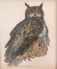 BIRGITTA SAFLUND - Great Grey Owl -watercolour - €350