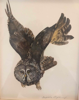 BIRGITTA SAFLUND - Eurasian Eagle Owl -watercolour - €350