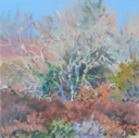 DAMARIS LYSAGHT - Autumn, Coolcaha 4 - oil on plywod - 15 x 15 cm - €285