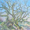 DAMARIS LYSAGHT - Venerable Oak - oil on canvas on panel - 45 x 45 cm - €1085