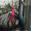 DIANA KINGSTON ~ Cockerel II - charcoal & pastel on paper - 46 x 46 cm - €450