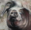 DIANA KINGSTON ~ Gubbeen Sow- mixed media on canvas - 20 x 20 cm - SOLD