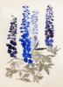 GRÁINNE CUFFE ~ Delphiniums I - etching - 146 x 102 cm - TWO SOLD
