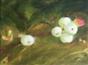 HELEN O'KEEFFE - Snowberry 4 - oil on canvas - 15 x 20 cm -€300 - SOLD