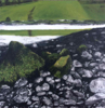 JANET MURRAN - Green Field, Green reflection - charcoal & acrylic on panel - 30 x 30 cm - €395