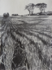 JANET MURRAN ~ Two Trees III - pencil on canvas - 38 x 31 cm - €245