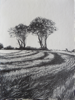 JANET MURRAN ~ Two Trees IV - pencil on canvas - 38 x 31 cm - €245