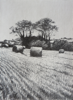 JANET MURRAN ~ Two Trees V - pencil on canvas - 38 x 31 cm - €245