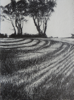 JANET MURRAN ~ Two Trees VII - pencil on canvas - 38 x 31 cm - €245