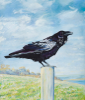 PETER WOLSTENHOLME - Woodpoint Raven on Guard - oil on canvas on board - 35.5 x 30 cm - €750
