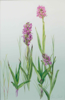 SONIA CALDWELL - Early Purple Orchids - watercolour on paper - 43 x 33 cm - guide price €250
